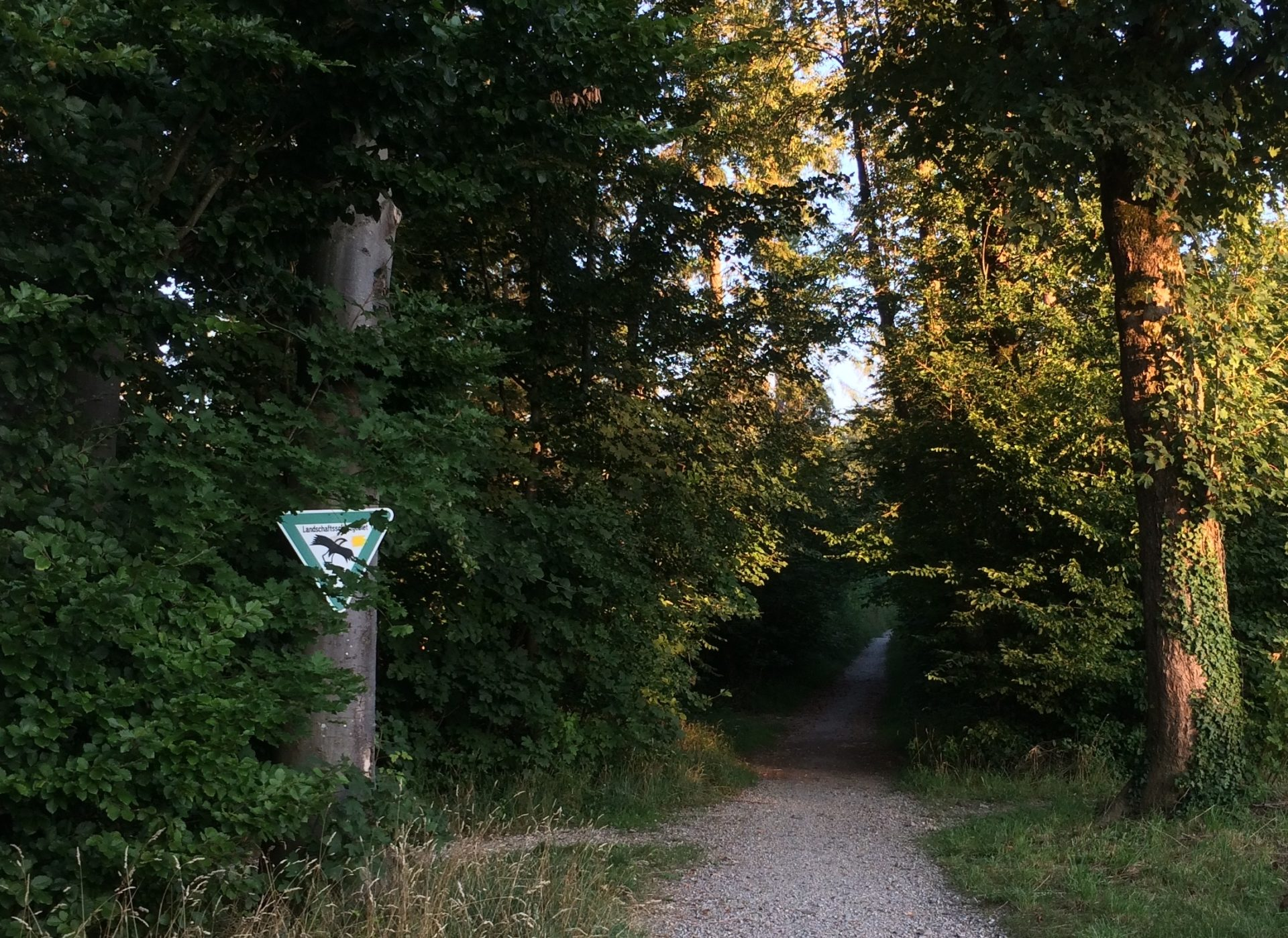 Ramadama - CleanUp Perlacher Forst in Harlaching, München (Bayern)